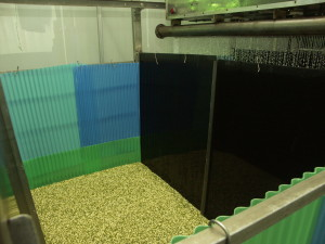 Seeds being irrigated in a sprouting chamber. One contaminated seed can infect the whole batch.
