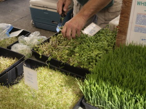 A variety of sprouts sold at the farmer's market. Photo credit: William Keene