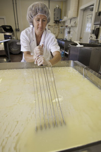 Cutting the milk curds into small cubes using a curd knife.