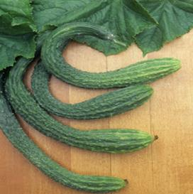 Photo Credit: (newrootsforrefugees.blogspot.com) Asian cucumber