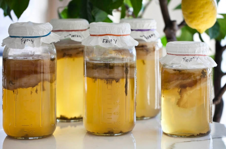 Kombucha | Food Source Information