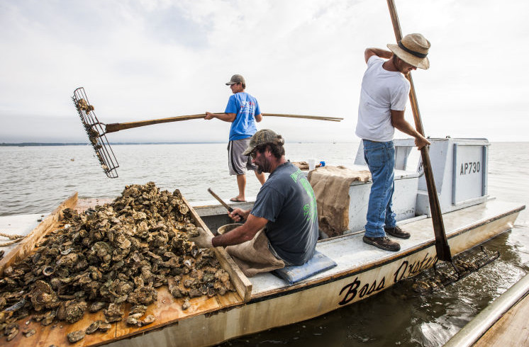Oystermen tonging in Apalachicola Bay, FL. Source: Tampa Bay Times