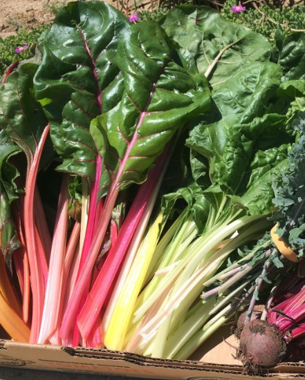 Swiss Chard Food Source Information