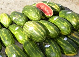 Harvested watermelon stacked